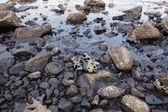 Oil spill on the sea shore — Stock Photo
