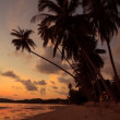 Idyllic tropical island beach at sunset with palm tree silhouette — Stock Photo