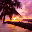 Tropical sunset with coconut palm tree over water — Stock Photo #38841989