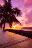 Tropical sunset with coconut palm tree over water — Stock Photo