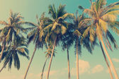 Vintage tropical palm trees — Stock Photo