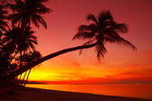 Sunset beach with palm — Stock Photo
