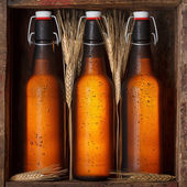 Beer bottles with wheat stems — Stock Photo