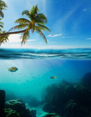 Tropical underwater shot — Stock Photo