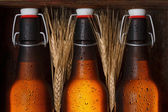 Beer bottles — Stock Photo