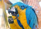 Heldere papegaaien. — Stockfoto