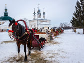 Russia, Suzdal, Horse — Stock Photo