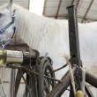 Stock Photo: Horse in stable with farrier stand