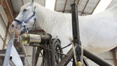 Horse in stable with farrier stand — Stock Photo