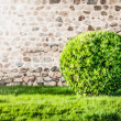 Green lawn and bush with wall in background. — Stock Photo #12725954