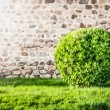 Green lawn and bush with wall in background. - Stock Photo