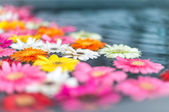 Beautiful multicolored flowers in water. — Stock Photo