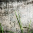 Old dark stone wall of building with green grass. - Stock Photo