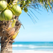 Coconut palm with sky and ocean background. - Stok fotoğraf