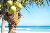 空と海の背景を持つココヤシの木. — ストック写真