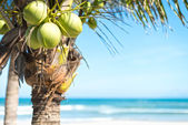 Coconut palm with sky and ocean background. — Stock Photo