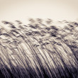 Foto Stock: Many cane stems in motion against light sky.