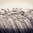 Stock Photo: Many cane stems in motion against light sky.