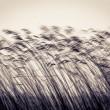 许多蔗茎的议案反对轻天空 — 图库照片
