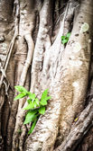 Young sprout growing through roots of old tree. — Foto de Stock