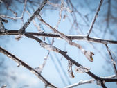 Winter tree branches with pure ice on them. — Stock fotografie