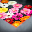 Multicolored flowers in water — Stock Photo
