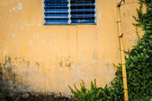 Grungy wall with window, bamboo and greenery — Stok fotoğraf
