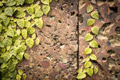 Stone wall with green leaves — Stock Photo