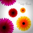 Paper flower on white background - vector — Stock Photo