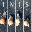 Stock Photo: Snail run