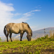 Stock Photo: Horse on field