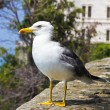 Sea gull Bird — Stock Photo