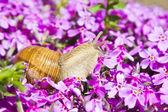 Snail in flowers — Stockfoto
