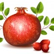 Pomegranate with leaves — Stock Vector