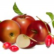 Red ripe apples and rose hip — Stock Vector