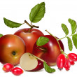 Vettoriale Stock : Red ripe apples and rose hip