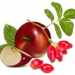 Red apples and rose hips. — Stock Vector #33424881