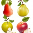 Photo-realistic vector fruits. — Stock Vector