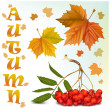 Maple leaves and ashberry. — Stock Vector