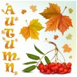 Maple leaves and ashberry. — Stock Vector #33425255