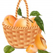 Ripe apricots in the basket. — Stock Vector