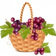 Bunch of grape in the basket. — Stock Vector