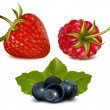Strawberry, raspberry and blueberries — Stock Vector #33425901