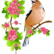 Bird on the flowering branch — Stock Vector