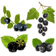 Black berries with leaves. — Stock Vector #33426119
