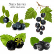 Black berries with leaves. — Stock Vector #33426121