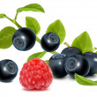 Bilberries and raspberry. — Stock Vector