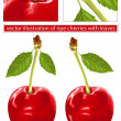 Red cherries with leaves — Stock Vector #33427067