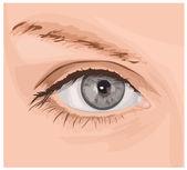 Ilustrace krásných očí — Stock vektor