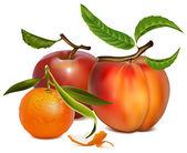 Meyve vektör çizim. — Stok Vektör